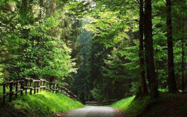 Camminata Nordic Walkingalla scoperta delle suggestioni della Piana del Cansiglio. Percorreremo un sentiero quasi totalmente sterrato tra boschi e panorami, partendo da Valmanera, lungo un anello di piacevoli saliscendi.