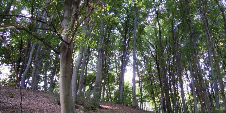 bosco montello